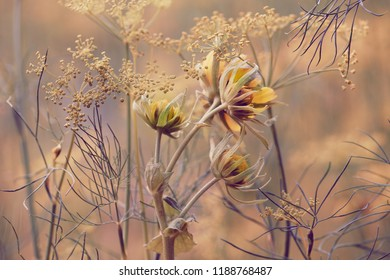 field grasses and flowers, a flower with yellow buds.
