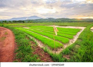 field green