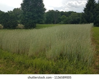 field of green and brown grass
