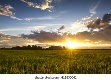field with green grass against the sunset sky.
