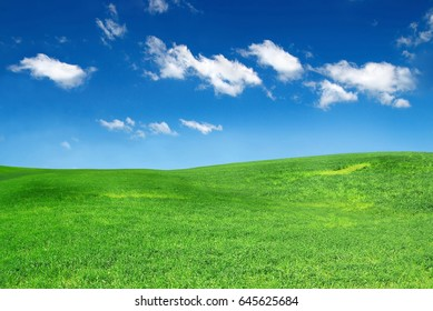 Field with green grass and blue sky