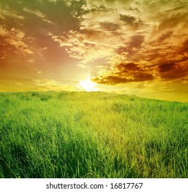 field of green grass on a background beautiful sunset