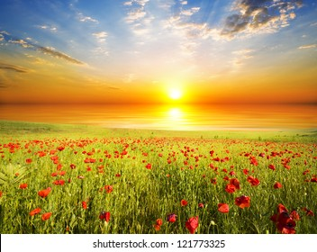 Feld mit grünem Gras und roten Pflaumen am Sonnenuntergangshimmel