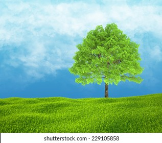 Field of green grass and sky with one tree