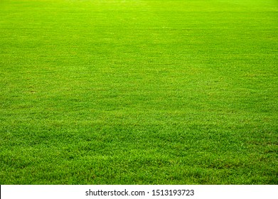 Field of green grass texture background