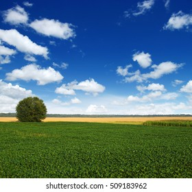 field of green grass and tree