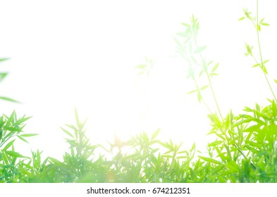 field of green leaf and sun in evening,beautiful environment ,green zone ,oxygen zone ,Relaxation zone, good for health.