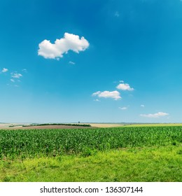 field with green maize under deep blue sky with clouds