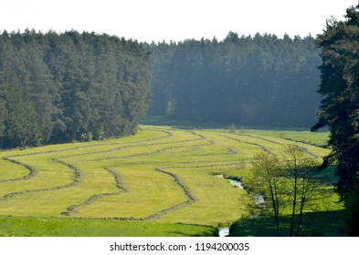 A field has been mown, leaving striped patterns. On either side it is bordered by fir trees. A small creek runs through it.
