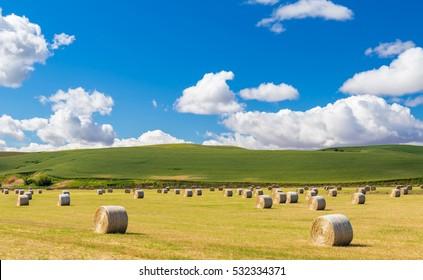 Field of hay bale