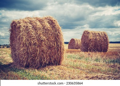 Field with hay bales in cloudy weather