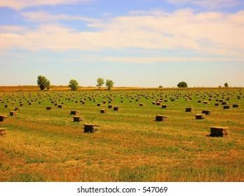 A field of hay bales in eastern colorado.