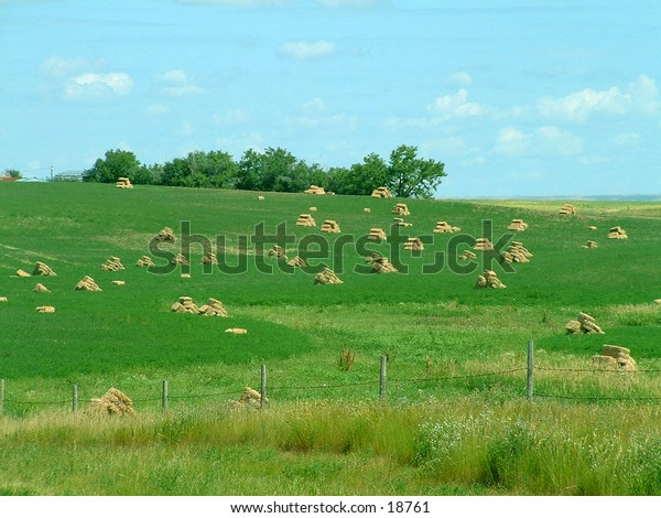 A field of hay bales on the prairie
