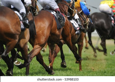 A field of horses and jockeys during a race.