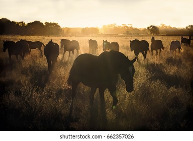 Field of Horses at Sunset.