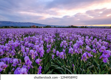 Field Of Flowers Images Stock Photos Vectors Shutterstock