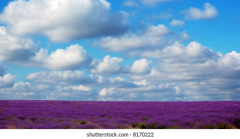 a field of lavender with sky in background