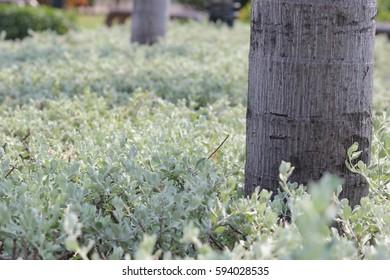 field leaves