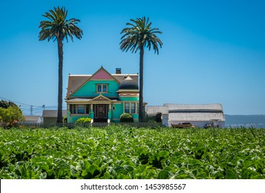 A field of lettuce crops in the Salinas Valley of central California, with an old Victorian farm house and a pair of palm trees in the distance.