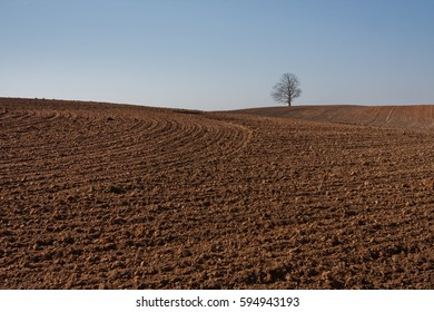 field with a lonely tree