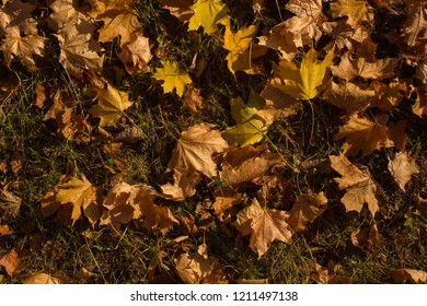 Field Maples Images Stock Photos Vectors Shutterstock