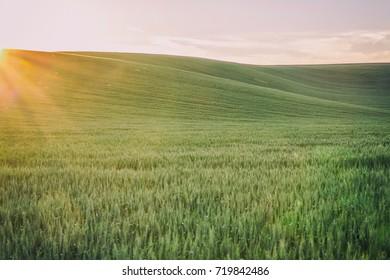 Field in Moravia