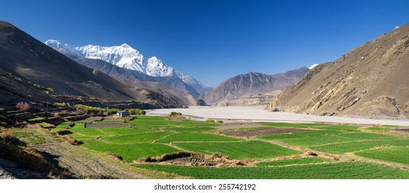 Field in mountain valley. Beautiful natural landscape