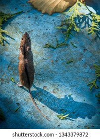 field mouse stands on its paws