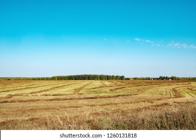 field with mowed grass to the horizon connects with the blue sky, autumn day in the field