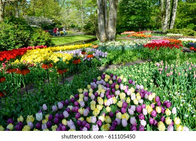 Field of multi colored tulips.Flower bed of colorful tulips in spring. Keukenhof park Netherlands.