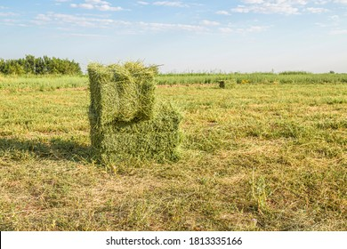 A field of newly cut and baled alfalfa or hay.
