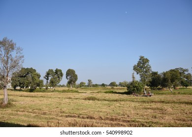 The field in the northeast of Thailand