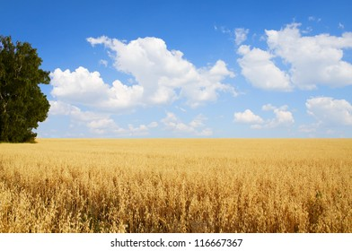 Field of oats and tree