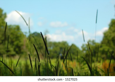 Field on a Sunny Day