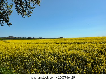 Field with overhanging tree