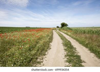 Field path, Mecklenburg-Vorpommern, Germany, Europe