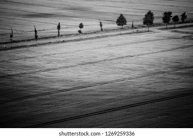 Field paths in the grain field with a row of trees