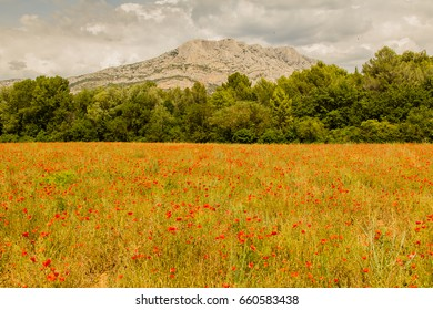 Field of poppies with the mountain Sainte Victoire in the background