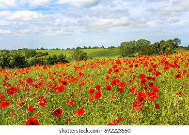 A field of poppies on Lolland, Denmark