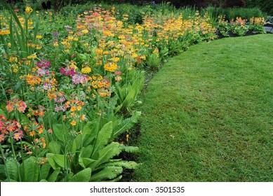 field of primulaceae