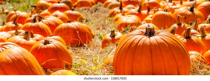 Field of pumpkins and straw