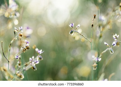 Field of Purple flowers in shallow focus