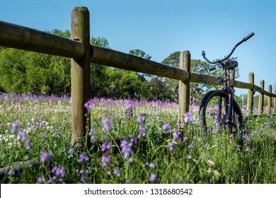 A field of purple, pink, orange and white flowers with a split rail, wooden fence and a vintage purple beach cruiser bicycle with a wire bike basket on a sunny, blue sky day.