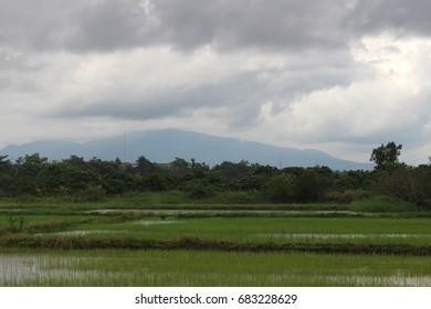 The field in the rain,cornfield