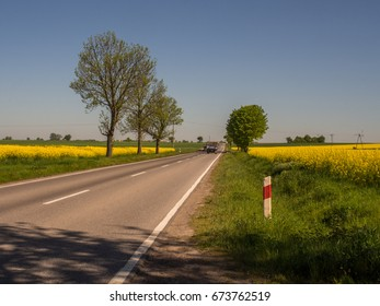 Field of rapeseed and theasphalt road on the background of blue sky