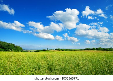 Field of Rapeseed under Blue Sky with Clouds