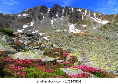 Field of red flowers and granite boulders on the valley