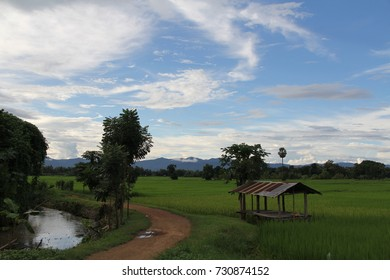 Field rice green  cottage farmer blue sky white cloud