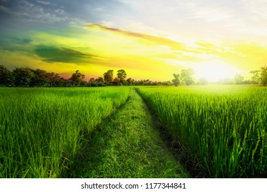 Field of ripe wheat on a background of blue cloudy sky and field green sunlight.Summer countryside landscape.Agriculture.Rural scene.