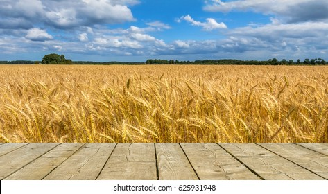 Field of ripening cereal. Board of planks may be used for text. Photo was taken in one of the ecologically cleanest regions of Europe